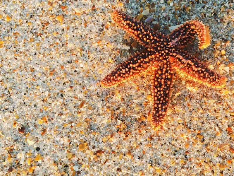 在海滩的海星 免版税图库摄影
