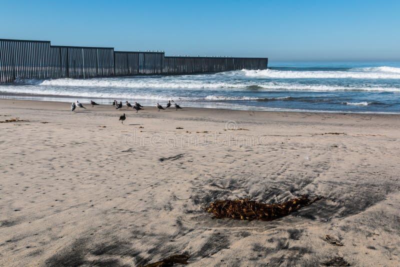 在海滩的海草在边界领域国家公园 库存图片