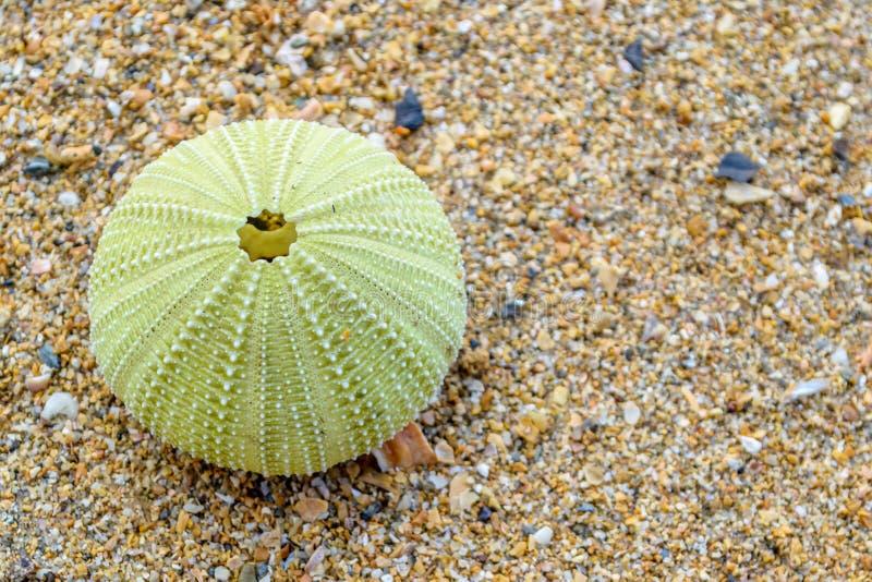 在海滩的海顽童 免版税图库摄影