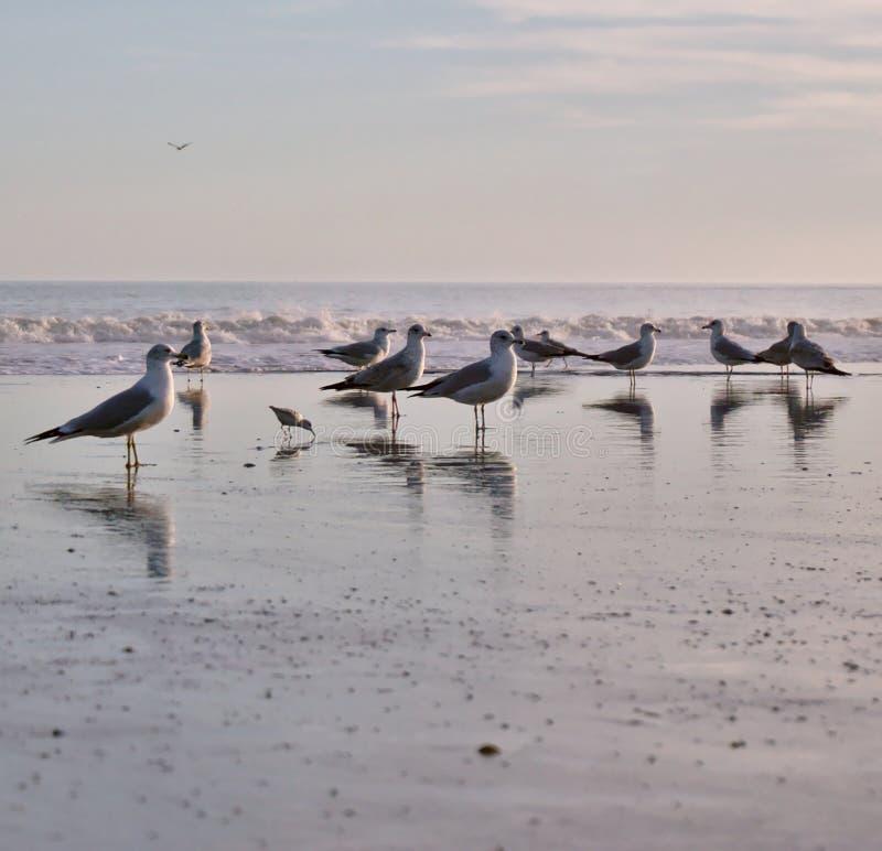 在海洋的海鸥群支持 免版税库存图片