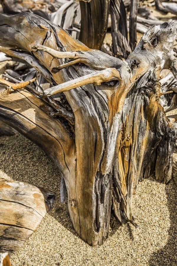 在海滩的被弄脏的漂流木头树桩在Flagstaff湖,缅因 免版税库存照片