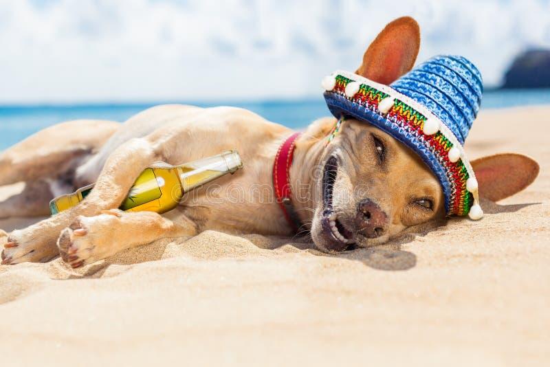 在海滩的醉酒的狗 免版税库存图片