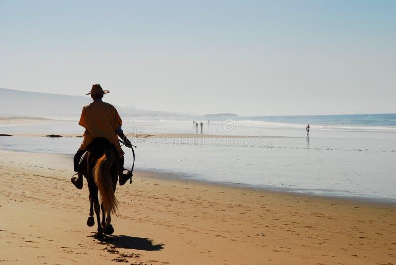 在海滩的马乘驾 Taghazout Souss马萨Drâa 摩洛哥 免版税库存图片