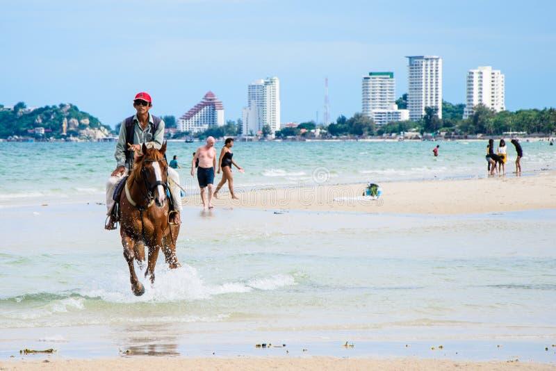 在海滩的骑乘马。 免版税库存照片