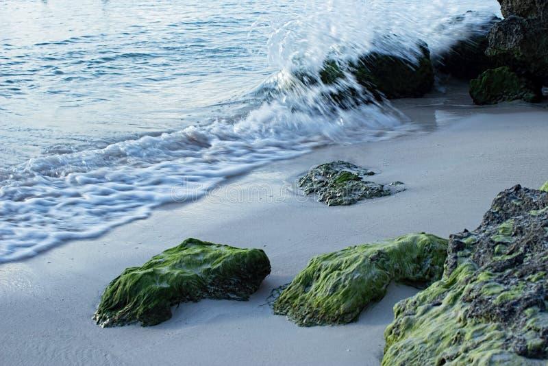在海滩的鲜绿色的生苔岩石在Oistins巴巴多斯 图库摄影