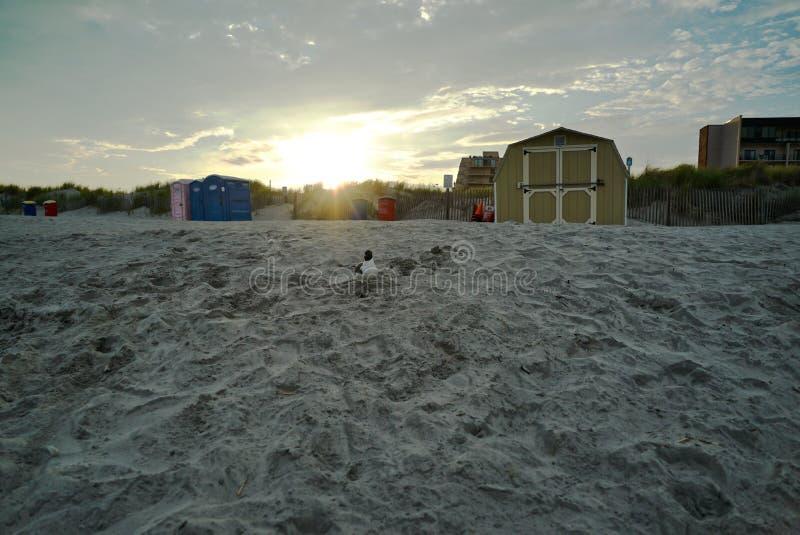 在海滩的鸟 库存图片