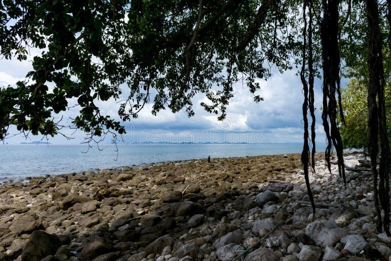 在海滩附近的大树在海岛 免版税图库摄影