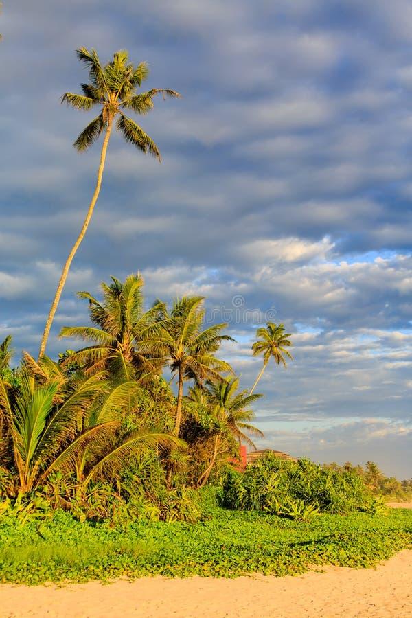 在海滩附近的棕榈树在日落 免版税库存图片