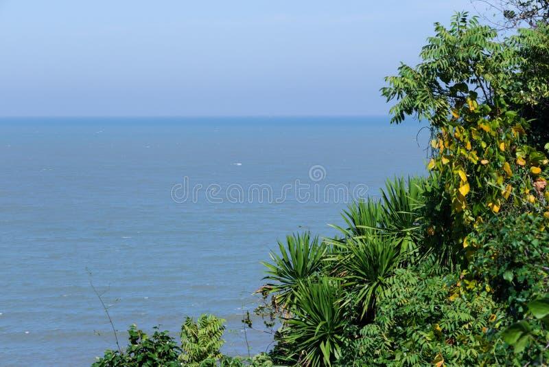 在海洋附近的豪华的密林绿叶有在dist的唯一波浪的 库存照片