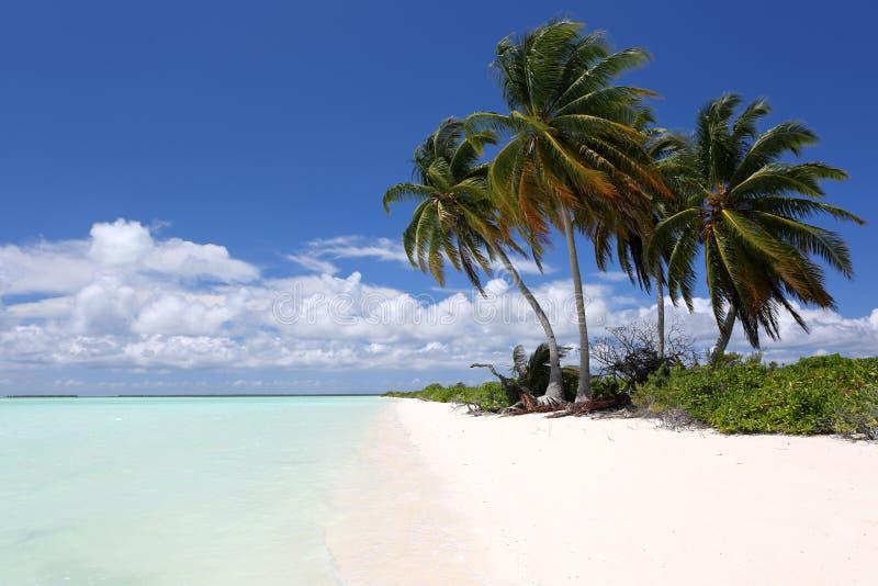 在海滩,巴黎, Kiritimati海岛的椰子树 免版税库存照片