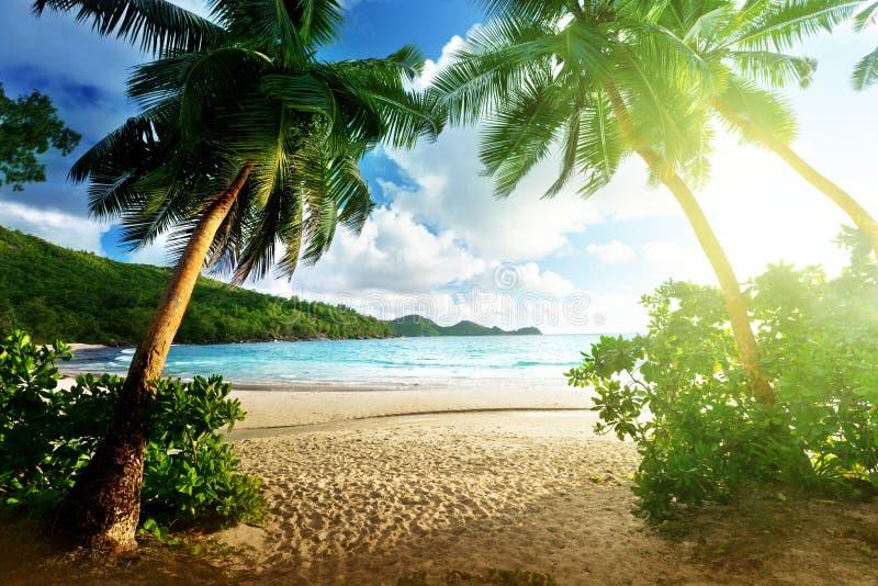 在海滩, Mahe海岛的日落 库存图片