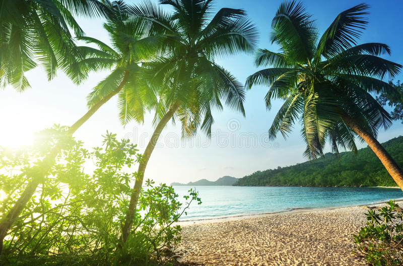 在海滩Takamaka, Mahe海岛的日落 免版税库存图片