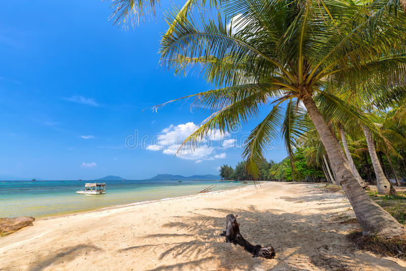 在海Phu Quoc,越南的椰子树 免版税库存照片