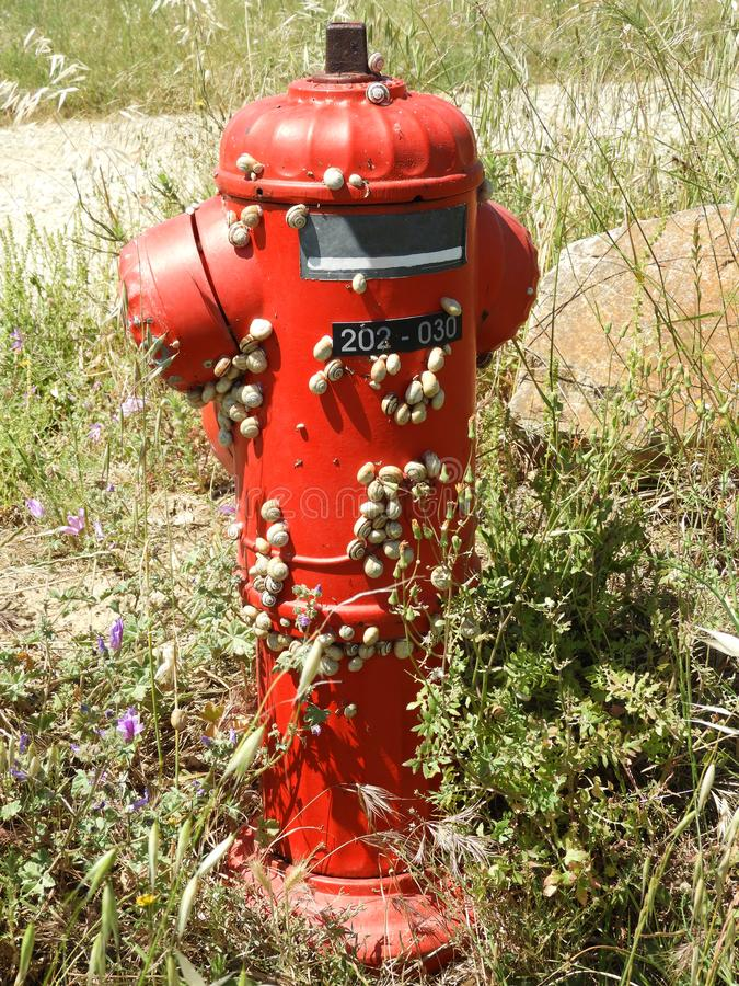 在消防栓的蜗牛 库存图片