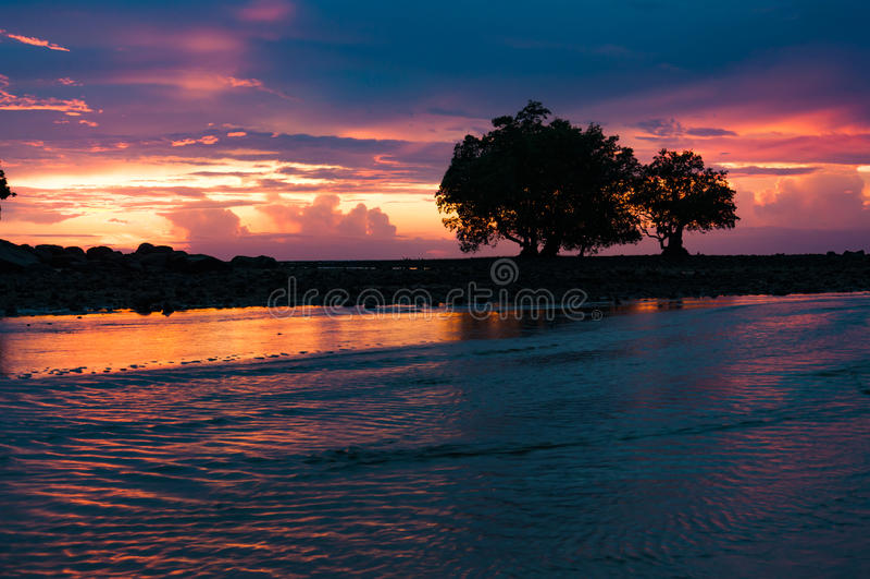美洲色�_在涨潮的现出轮廓的美洲红树在五颜六色的晚上日落以后