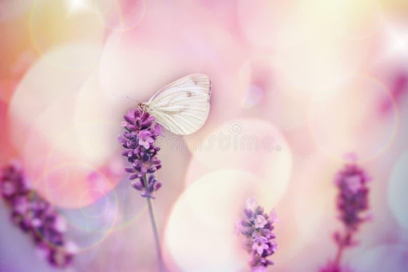 在淡紫色花,在白色蝴蝶的选择聚焦的蝴蝶 免版税库存照片