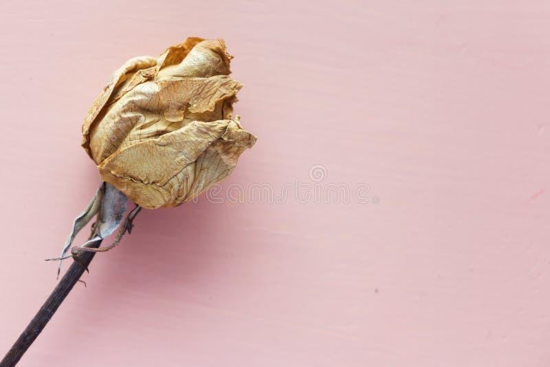 在淡色木背景的干桃红色玫瑰 免版税库存图片