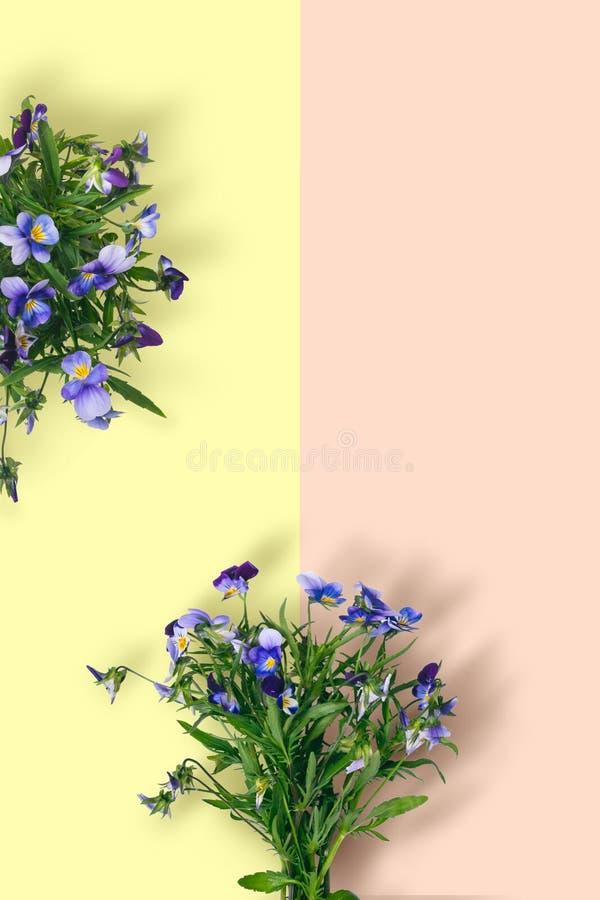 在淡色背景的狂放的紫罗兰色花花束 库存图片
