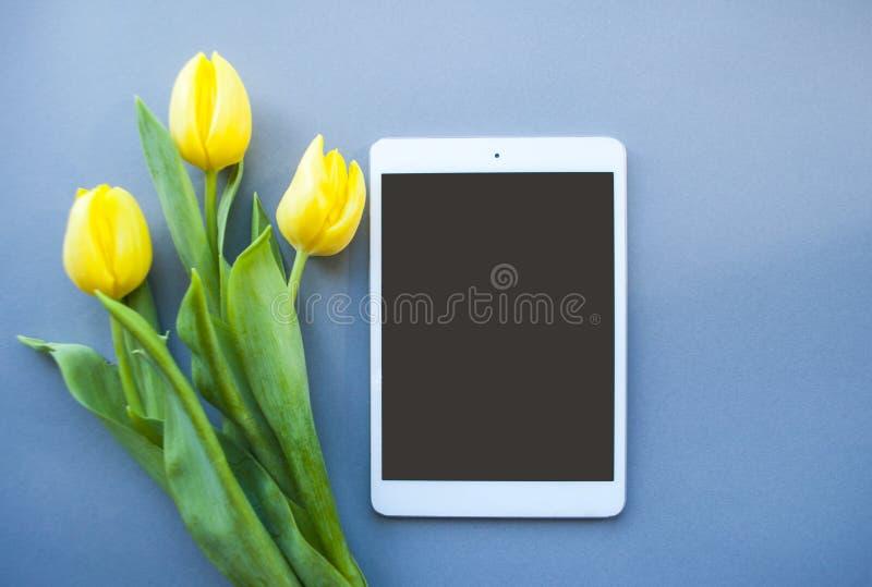 在淡色背景的黄色郁金香 免版税库存图片