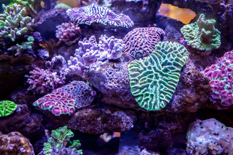 在深刻的淡紫色oce的水下的珊瑚礁风景背景 免版税图库摄影