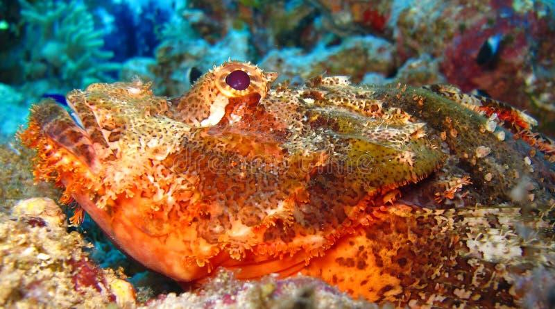在深水的水下的世界在珊瑚礁和植物在蓝色世界海洋野生生物、鱼、珊瑚和海生物的花植物群 图库摄影