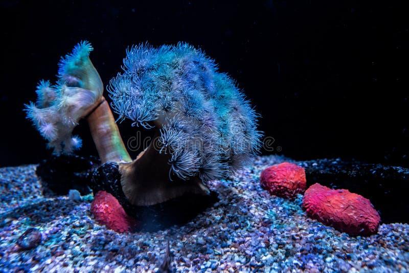 在深海 免版税库存图片