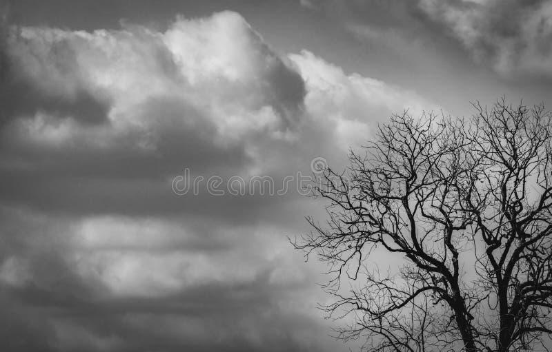 在深灰天空的剪影死的树和可怕,死亡和和平概念的白色云彩背景 : 免版税库存图片