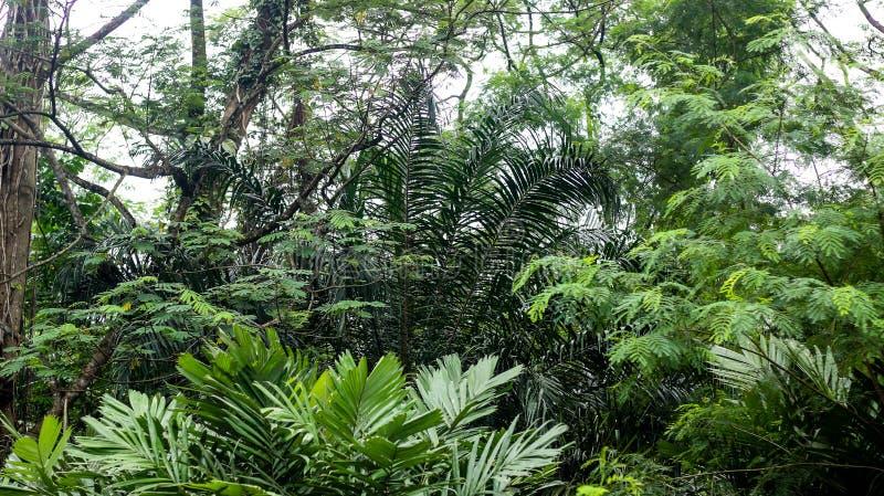 在深热带雨林中间 免版税库存图片