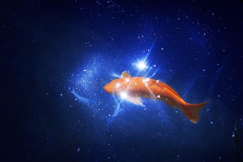 在深蓝发光的水,红色和黄色日本koi鲤鱼的金鱼在池塘关闭游泳,抽象金黄鱼星座 免版税库存照片