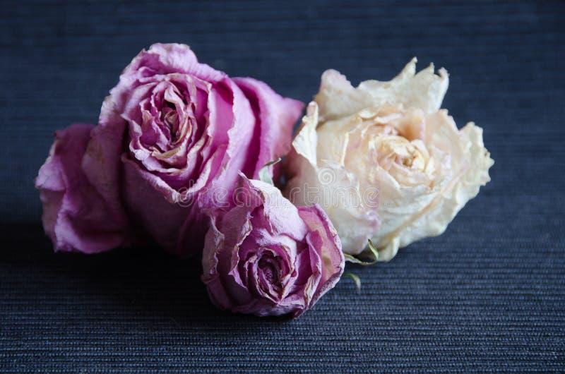 Download 在深蓝背景,选择聚焦的干花 库存照片. 图片 包括有 疗法, 花束, 没人, 紫色, 装饰, 颜色, 弯脚的 - 72359190