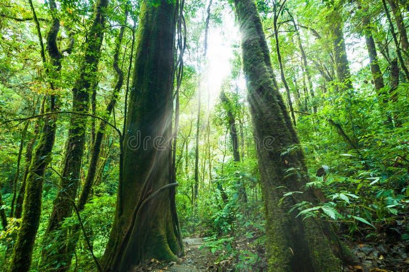 在深雨林的惊人的早晨与热带植物 免版税库存照片
