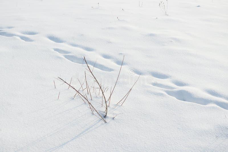 在深雪的脚印在领域 免版税图库摄影