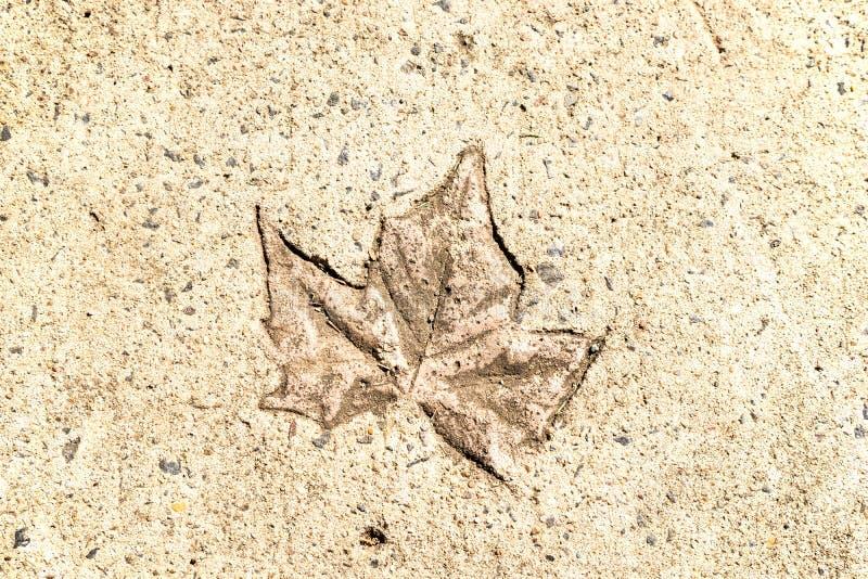 在混凝土的叶子印刷品 库存照片