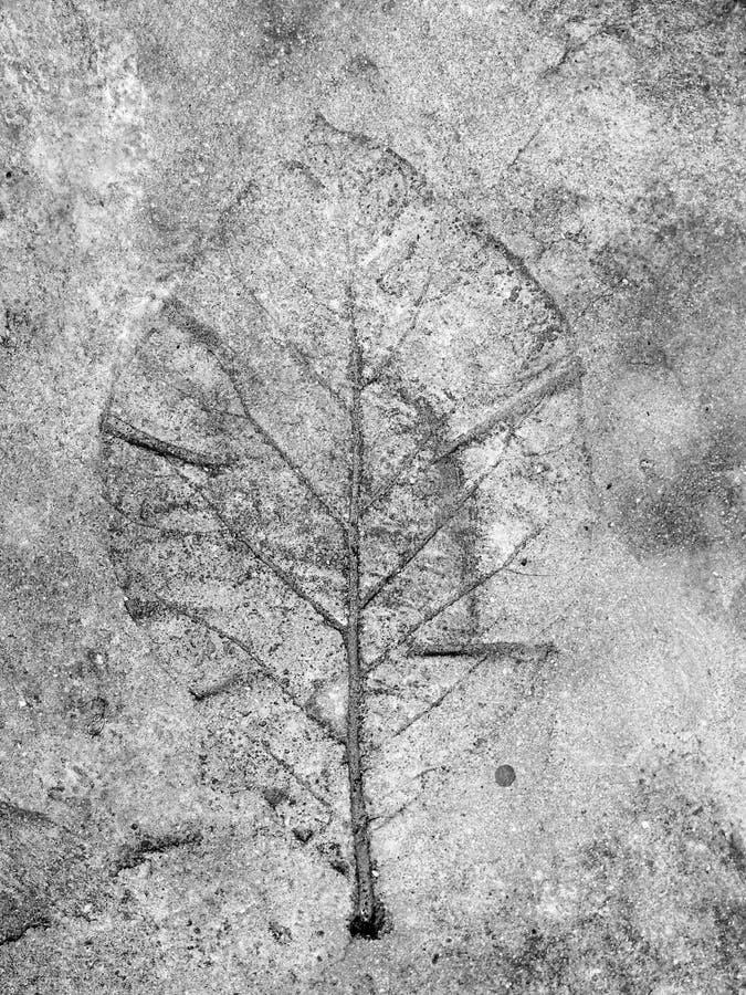 在混凝土路面的叶子 免版税图库摄影