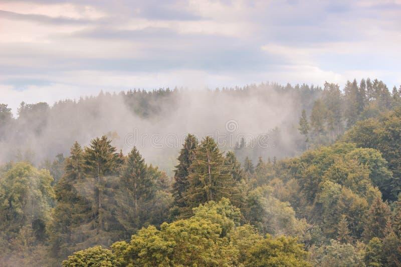 在清早拍摄的有薄雾的秋天森林风景 喜怒无常的风景 秋天背景,有雾 行家葡萄酒减速火箭的样式 免版税库存照片
