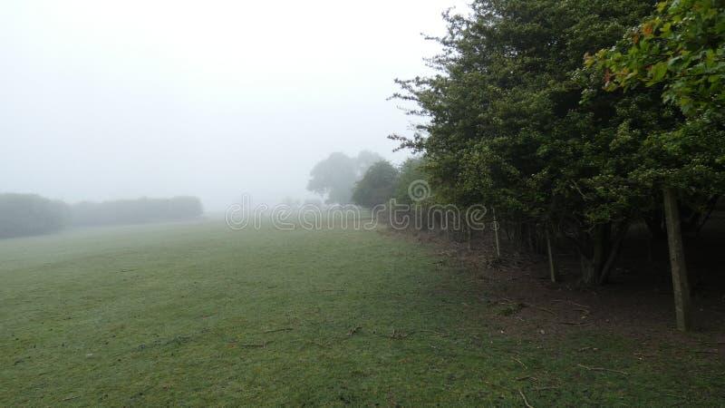 在清早有薄雾的英国春天草甸5的距离的鹿 免版税库存图片