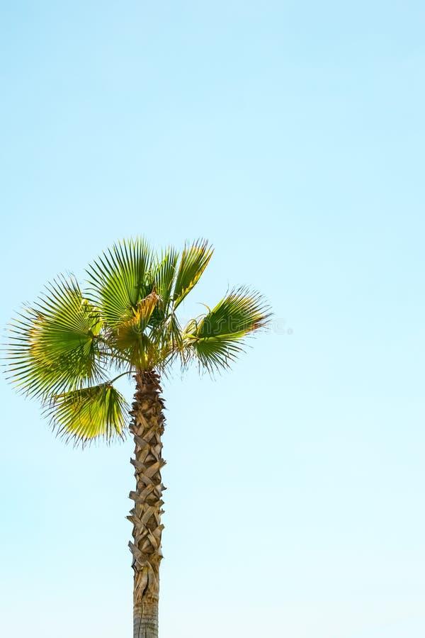 在清楚的天空蔚蓝的一棵孤立棕榈树 免版税图库摄影