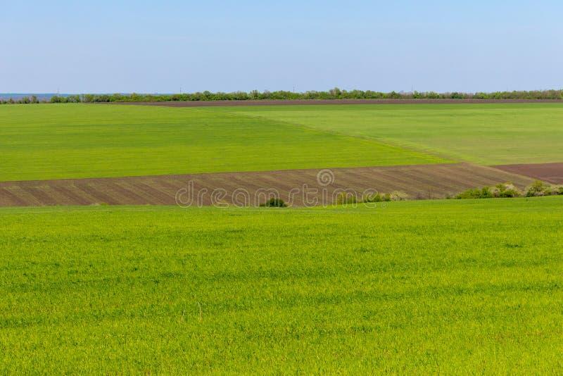 在清楚的蓝天的耕地和绿草领域 全景风景 绿色草甸 库存图片