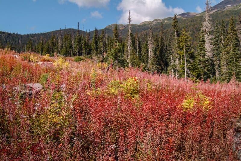 在清楚的野草-山和森林 免版税库存图片