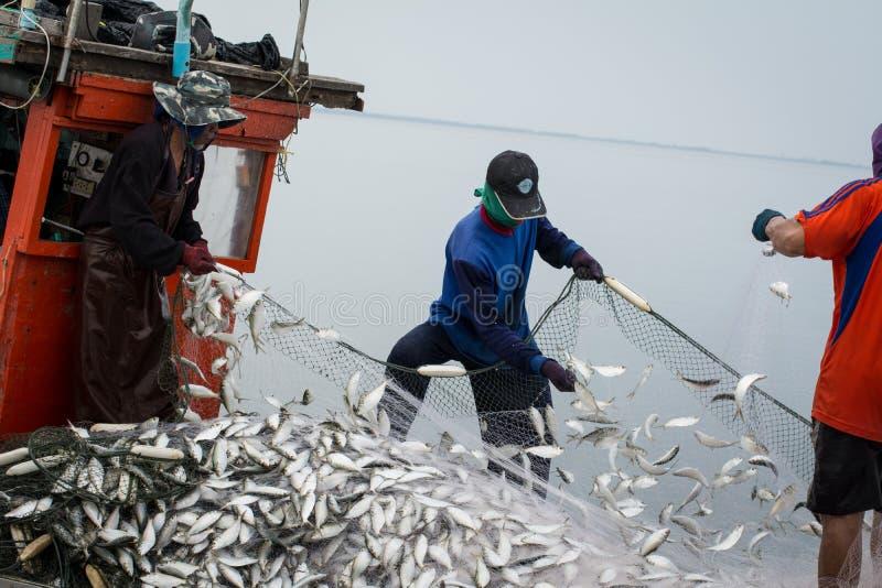 在渔夫小船上,抓许多鱼 免版税库存照片