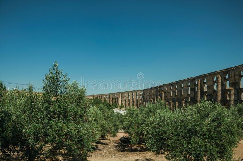 在渡槽前面的橄榄树有曲拱和长方形柱子的 图库摄影