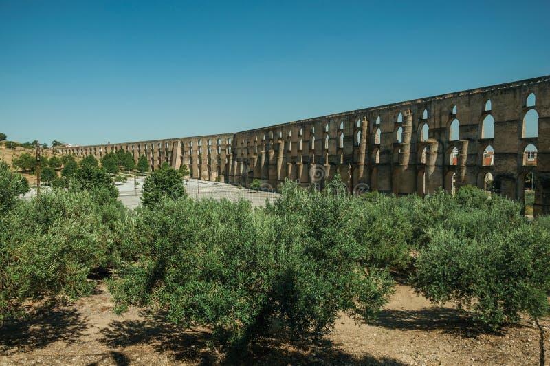 在渡槽前面的橄榄树有曲拱和长方形柱子的 库存图片