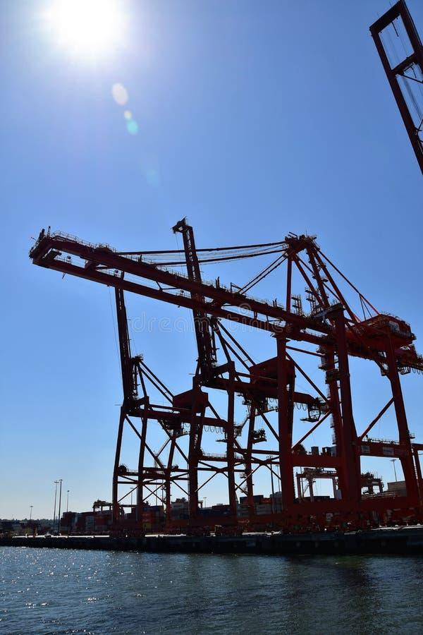 在温哥华海湾的起重机 免版税库存图片