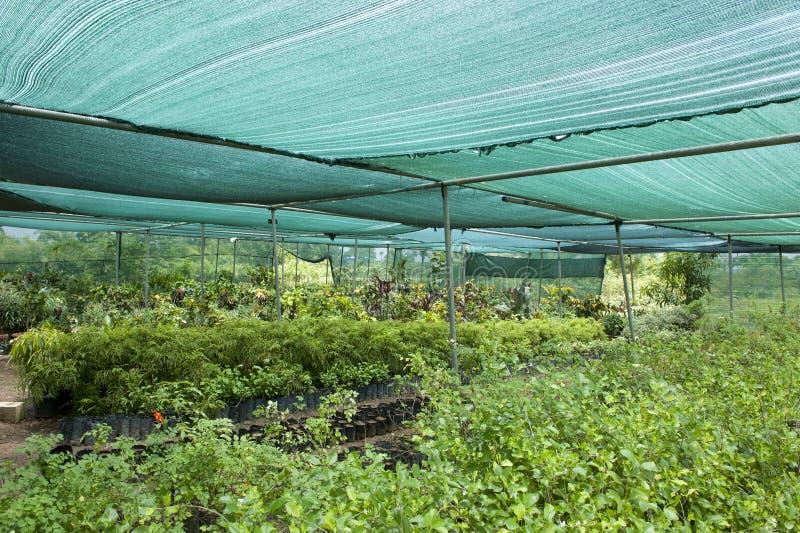 在温室里耕种的植物 免版税图库摄影