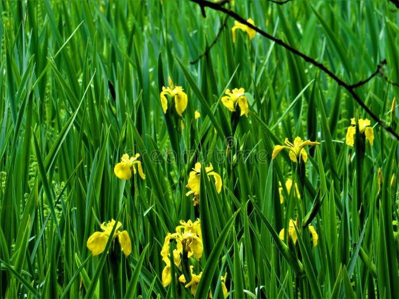 在港湾Derg旁边的沼泽植物 免版税库存照片