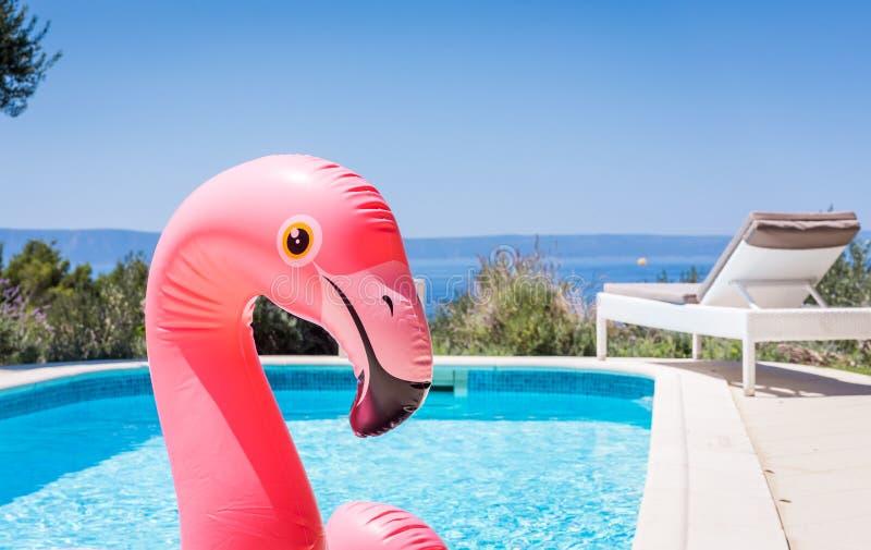 在游泳场waterbed的桃红色火鸟 免版税库存图片