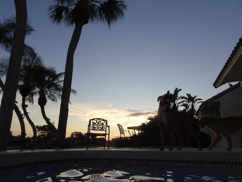 在游泳池的日落和棕榈树 免版税库存照片
