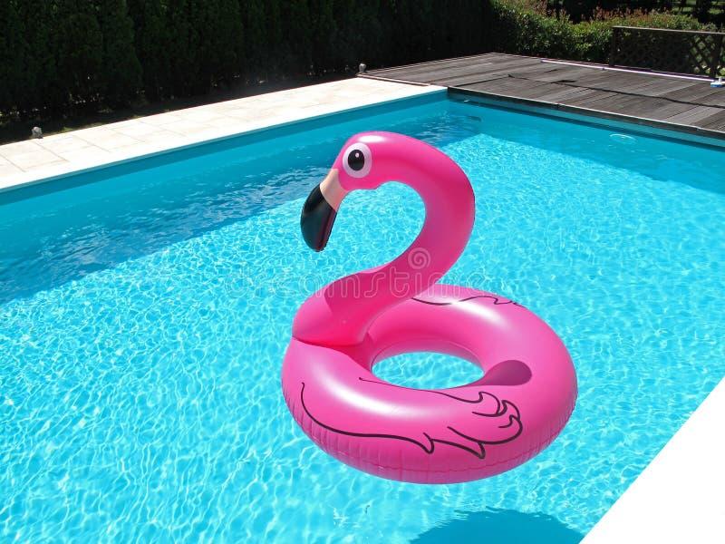 在游泳池的桃红色火鸟 免版税库存图片
