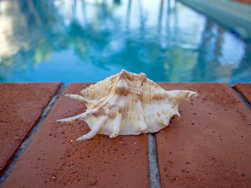 在游泳池边缘宽图象的壳 库存照片