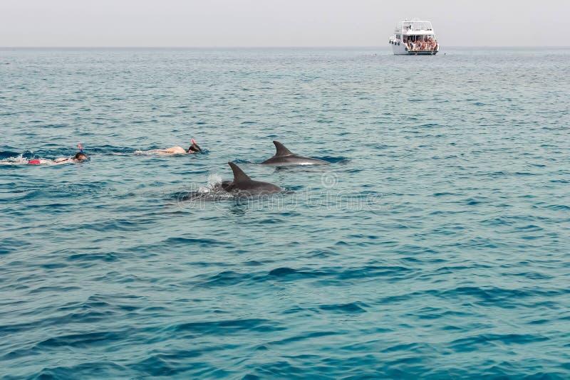 在游艇的游览向海豚的高红海 面具的两个人为 库存照片